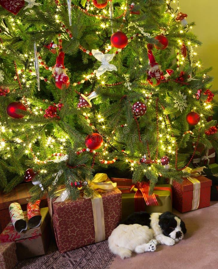 Perro soñoliento con la Navidad imagen de archivo libre de regalías