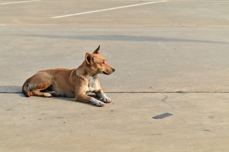 Perro solamente sin hogar en el aparcamiento en ciudad fotografía de archivo libre de regalías