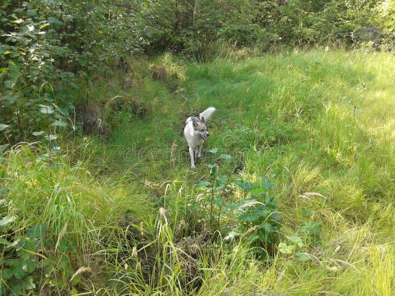 Perro solo en el bosque imagenes de archivo