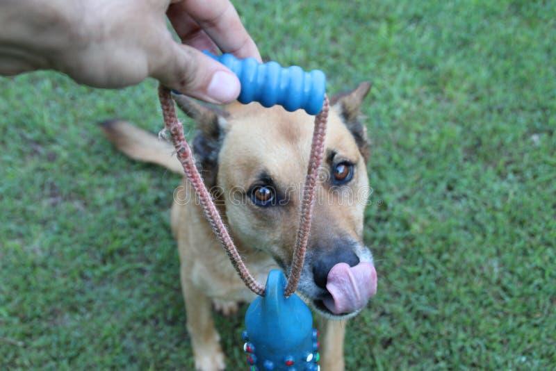 Perro - sonrisa grande imagen de archivo libre de regalías