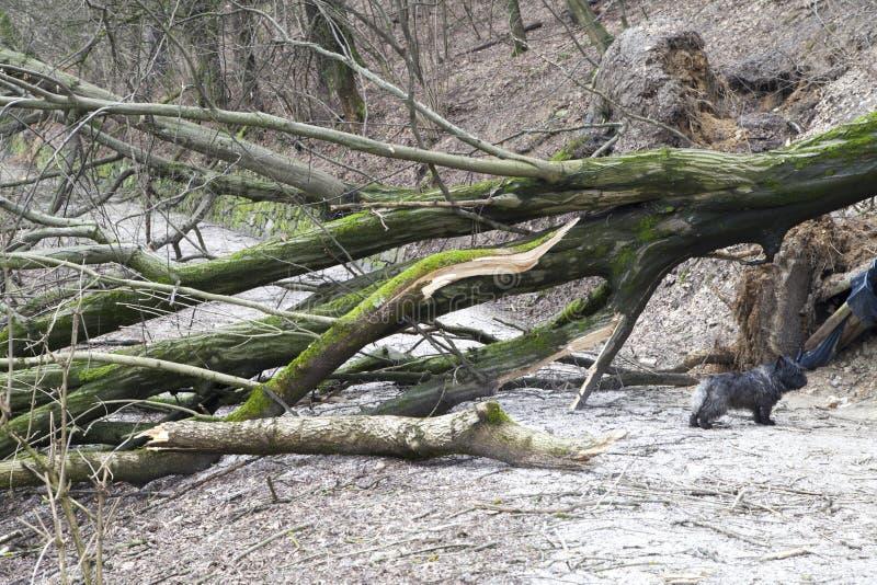 Perro sorprendido debajo de árboles desarraigados imagen de archivo libre de regalías