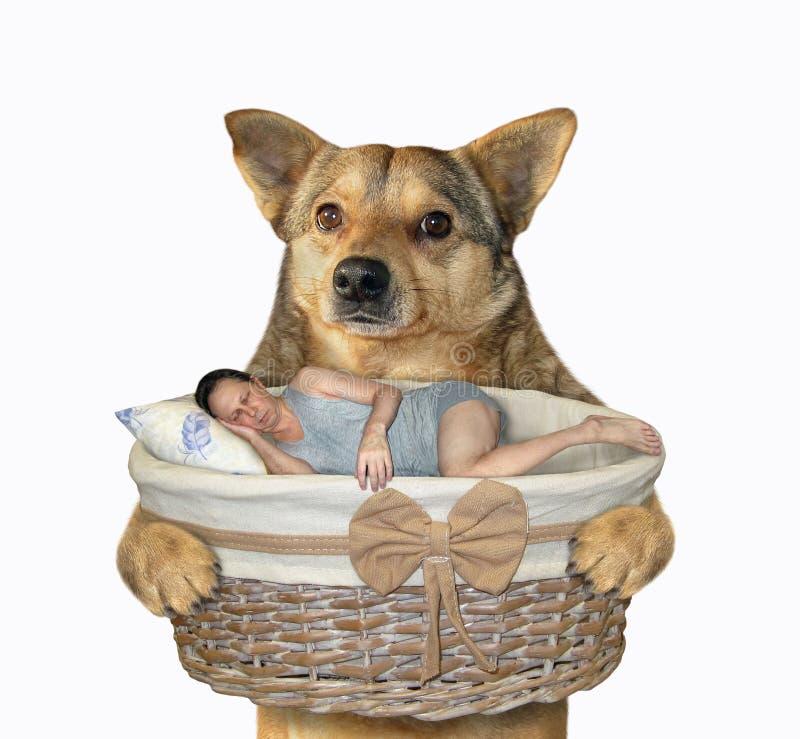 Perro sostiene cesta con hombre dormido fotografía de archivo