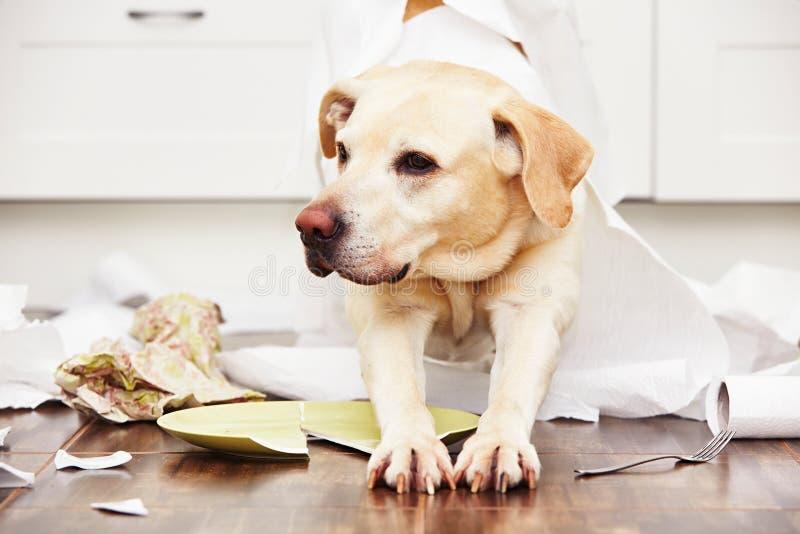 Perro travieso imagen de archivo libre de regalías