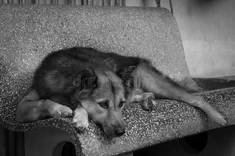 Perro triste en la silla que espera el jefe fotografía de archivo