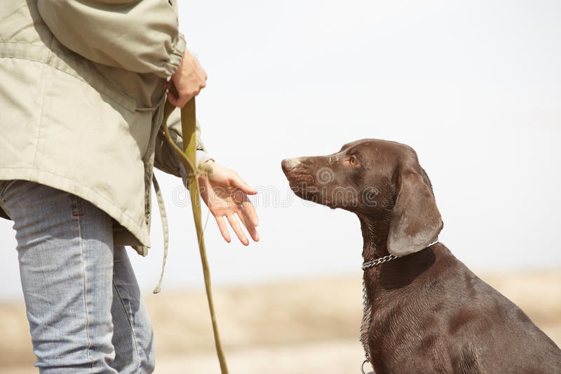 Perro y amaestrador fotografía de archivo libre de regalías