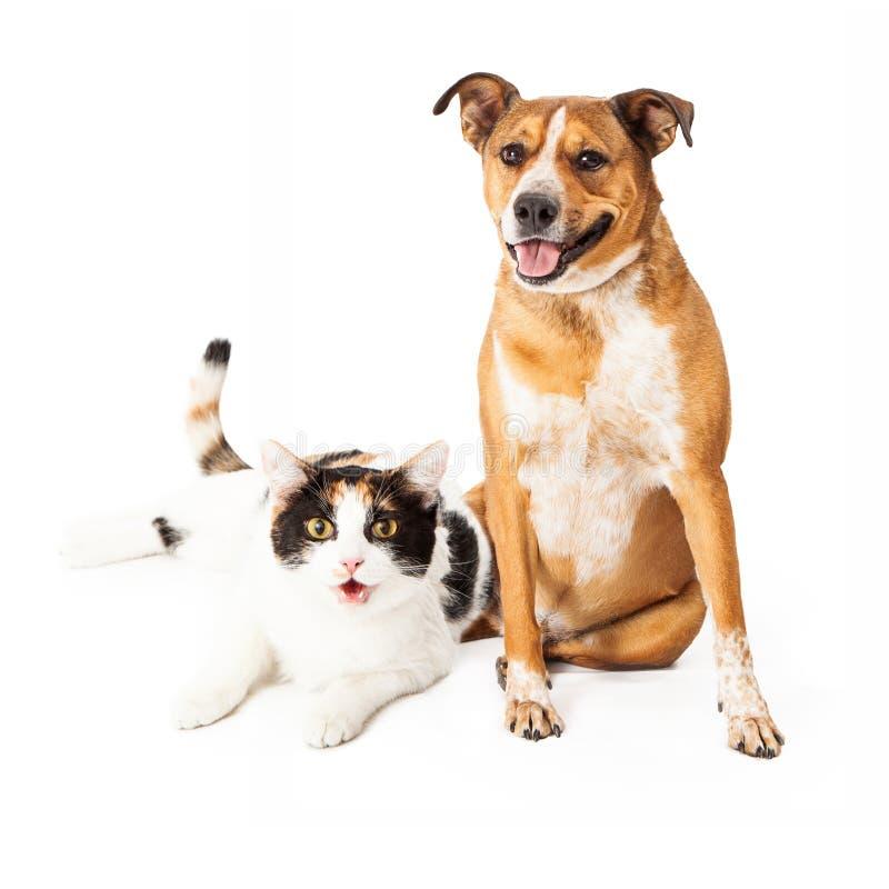 Perro y Cat Sitting Together felices fotografía de archivo libre de regalías