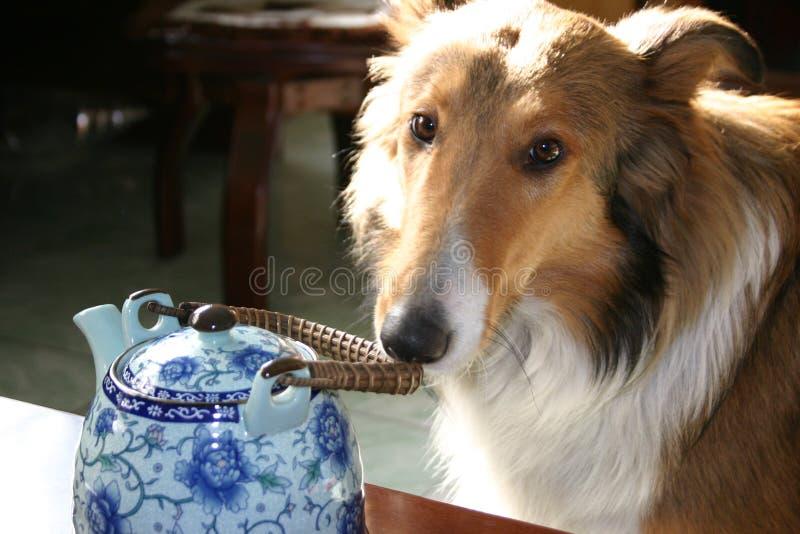Perro y crisol del té imagen de archivo