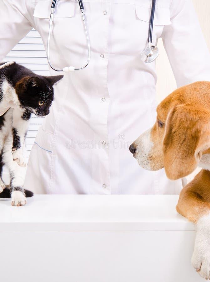 Perro y gatito en el veterinario imagenes de archivo