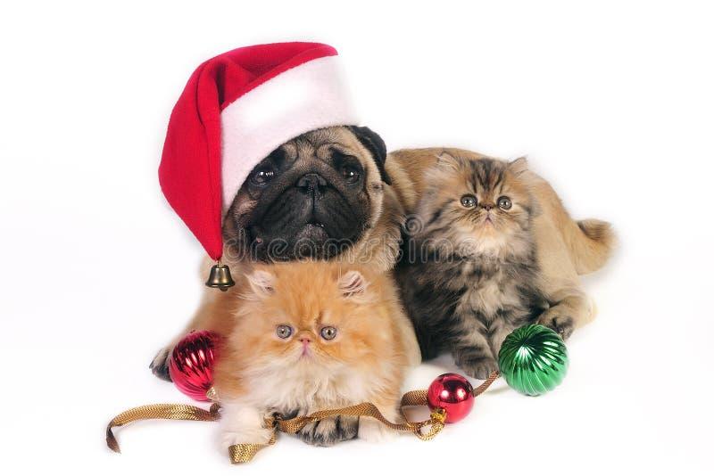 Download Perro Y Gatitos De La Navidad. Foto de archivo - Imagen de chistoso, pedigrí: 7150208