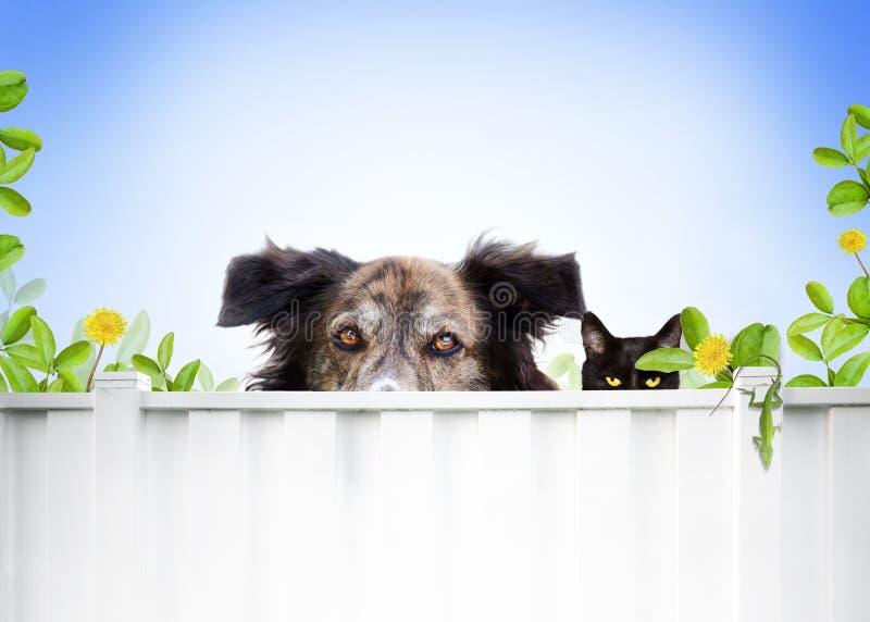 Perro y gato foto de archivo libre de regalías