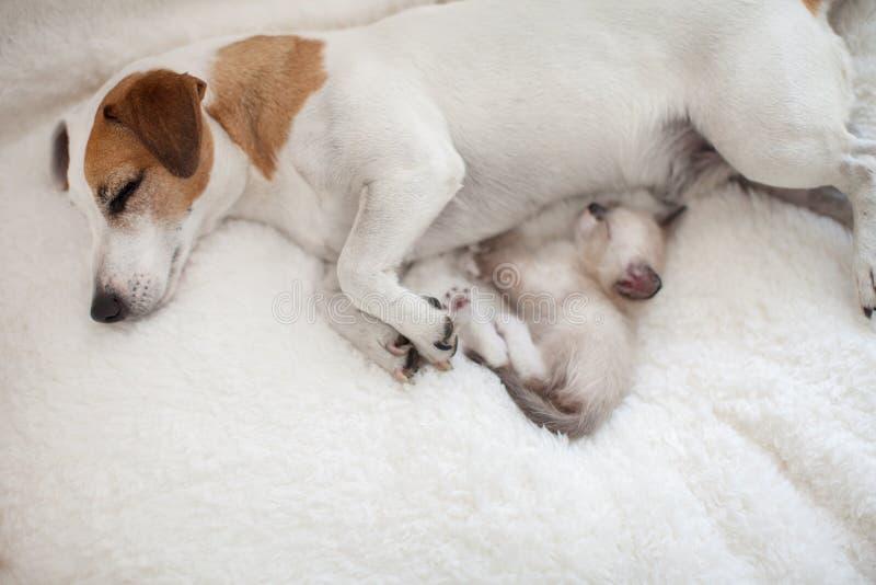 Perro y gato descansando juntos foto de archivo libre de regalías