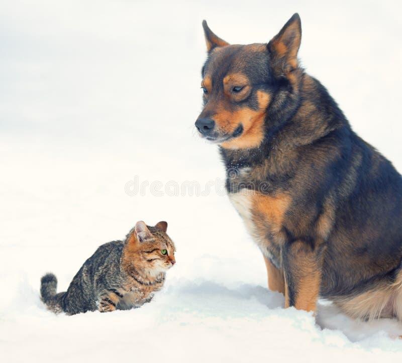 Perro y gato en nieve fotografía de archivo