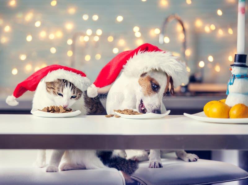 Perro y gato en sombrero de la Navidad que comen la comida imagen de archivo