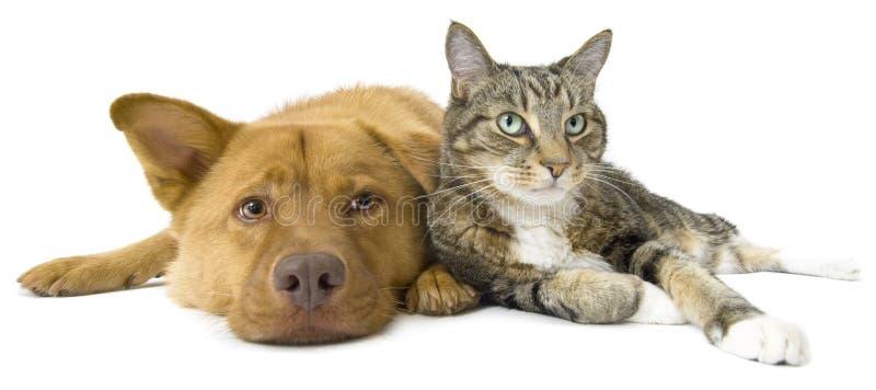 Perro y gato junto granangulares foto de archivo