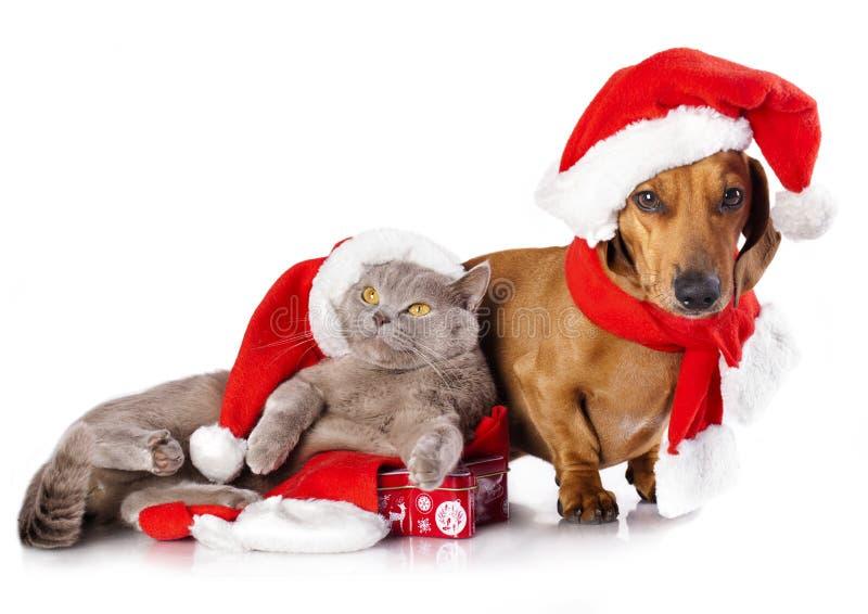 Perro y gato que llevan un sombrero de santa fotos de archivo libres de regalías