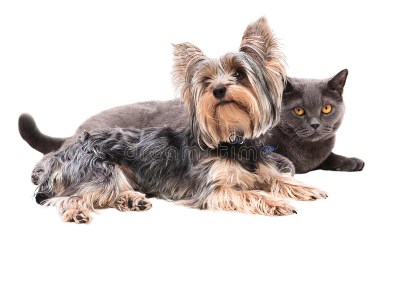 Perro y gato que se sientan al lado de fotografía de archivo