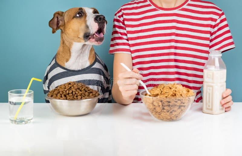 Perro y humano hambrientos desayunando junto Enfermedad de Minimalistic imagen de archivo libre de regalías