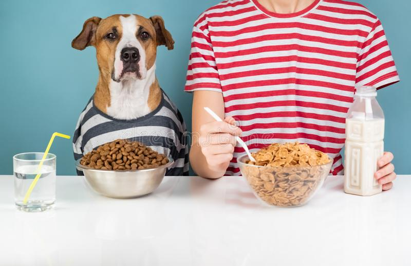 Perro y humano hambrientos desayunando junto Enfermedad de Minimalistic foto de archivo libre de regalías
