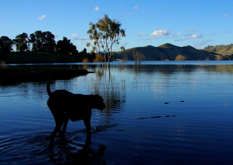 Perro y lago imagenes de archivo
