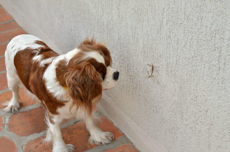 Perro y mosquitos fotografía de archivo