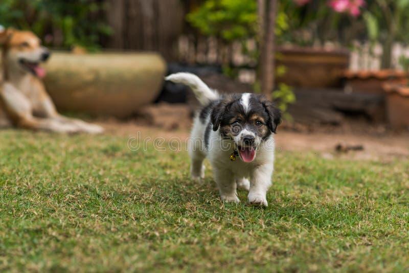 Perro y perritos de la madre fotografía de archivo