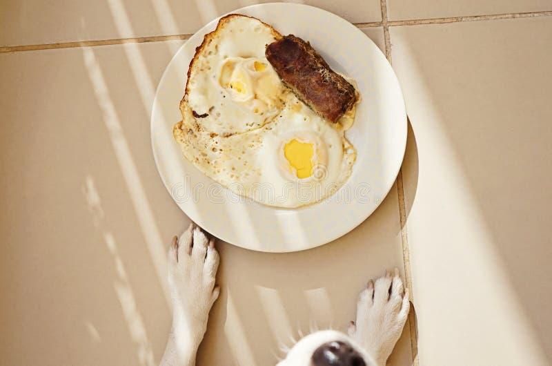 Perro y placa con los huevos fritos y la chuleta de la carne imagen de archivo