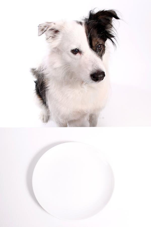 Perro y placa vacía imágenes de archivo libres de regalías