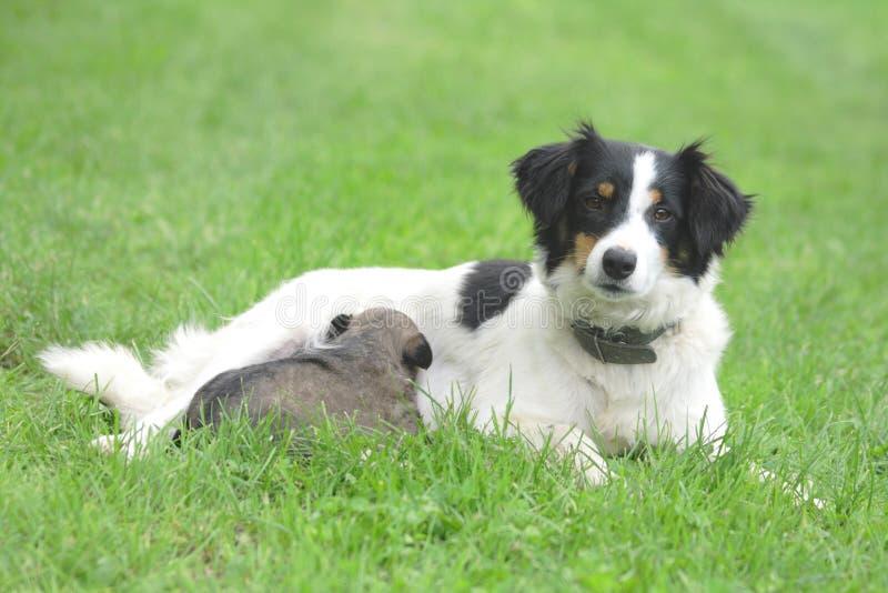 Perro y su hijo foto de archivo