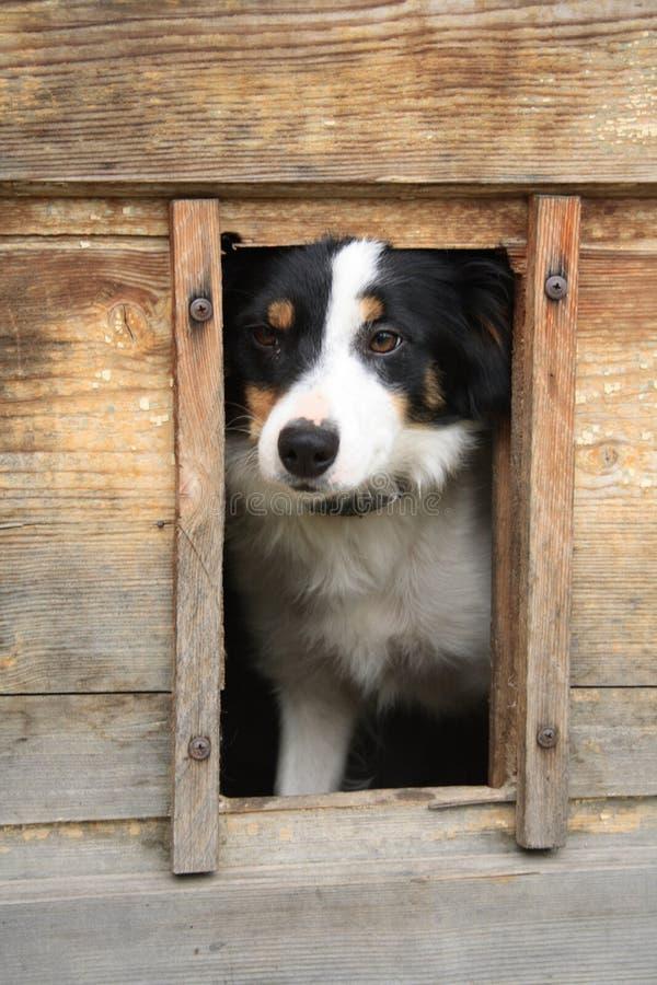 Perro y su hogar imágenes de archivo libres de regalías