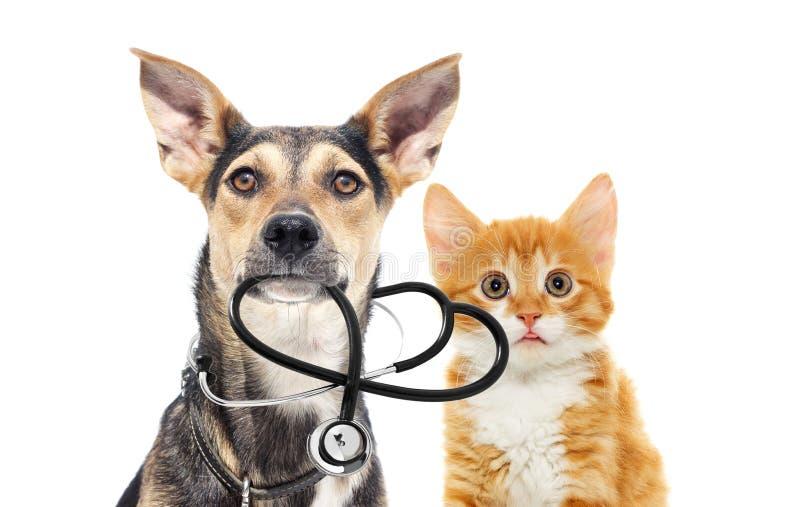 Perro y un gato y un estetoscopio imagenes de archivo