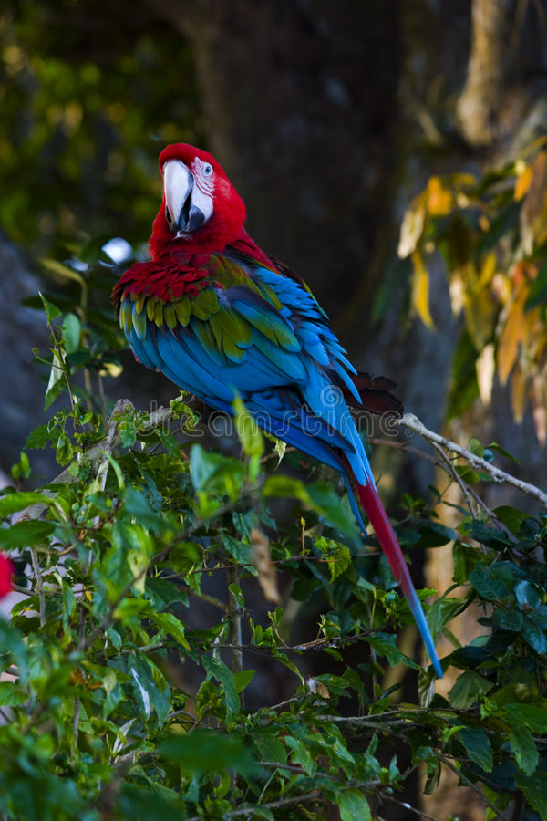 Perroquet photos libres de droits