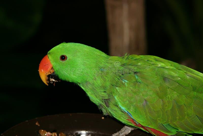 Download Perroquet photo stock. Image du monde, oiseau, vert, clavettes - 91048