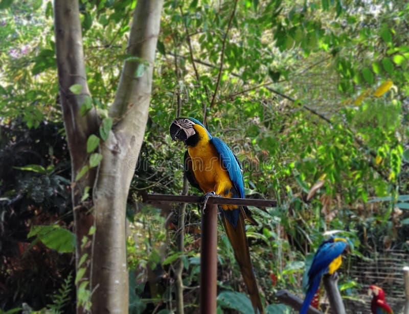 Perroquet coloré dans la forêt photos stock