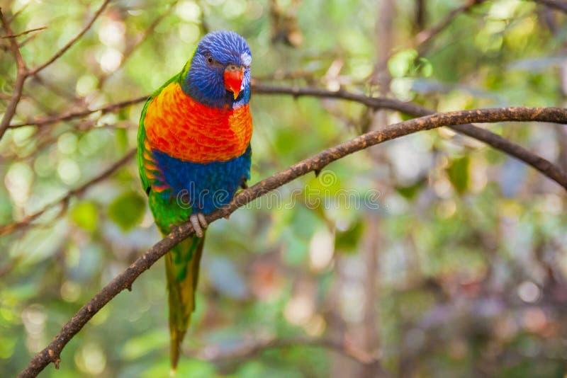 Perroquet coloré en parc de Loro, Ténérife photographie stock libre de droits