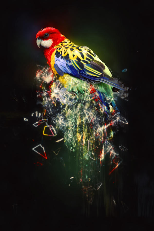 Perroquet, concept animal abstrait images stock