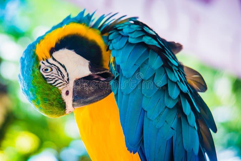 Perroquet d'oiseau photo libre de droits