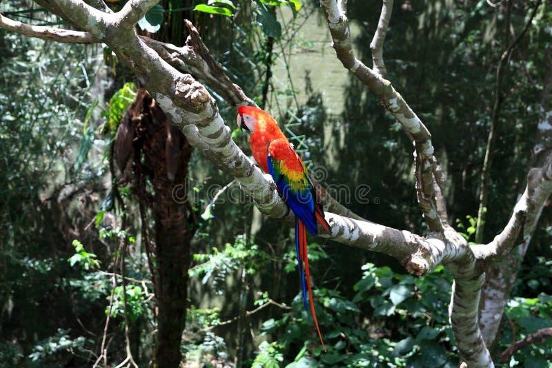 Perroquet dans l'arbre photographie stock libre de droits
