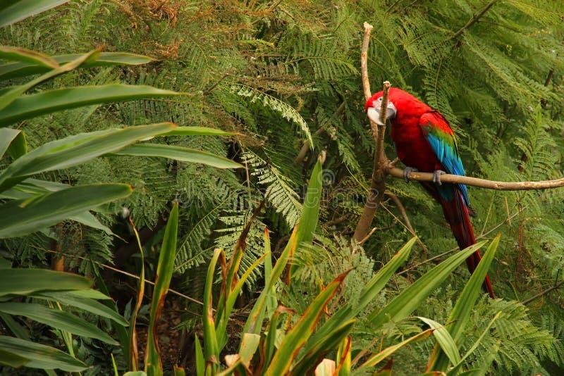 Perroquet dans la forêt photos stock