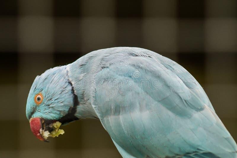 Perroquet dans un zoo russe image stock