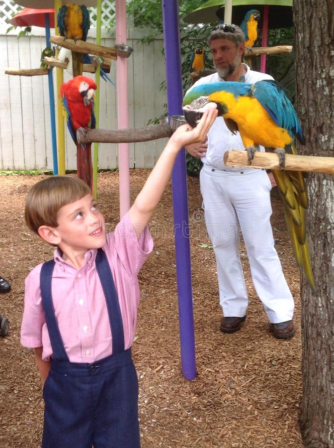 Perroquet de alimentation de garçon photo libre de droits