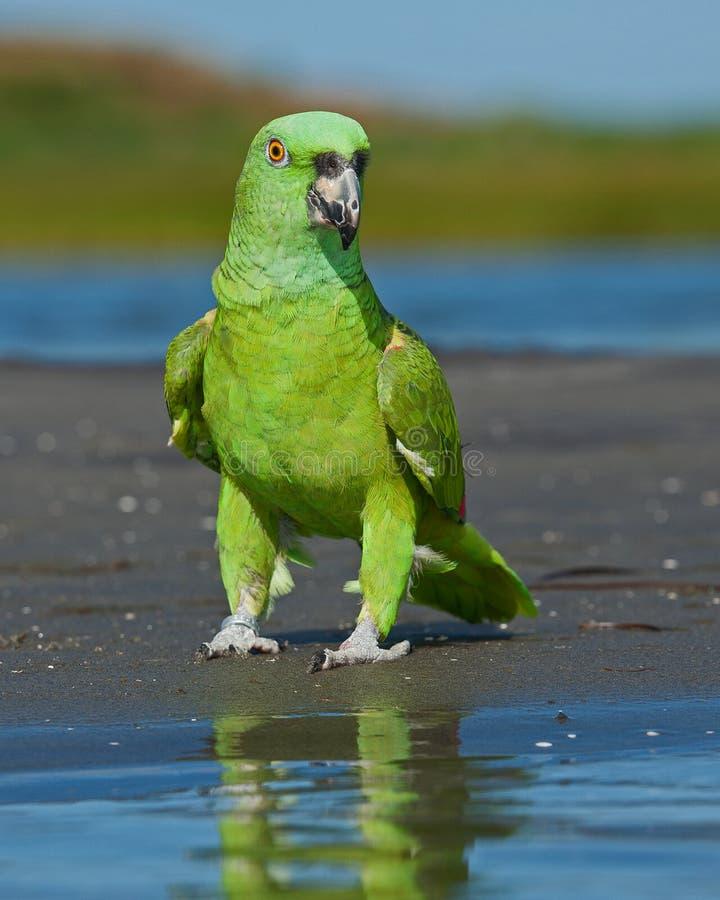 Perroquet par la mer photographie stock