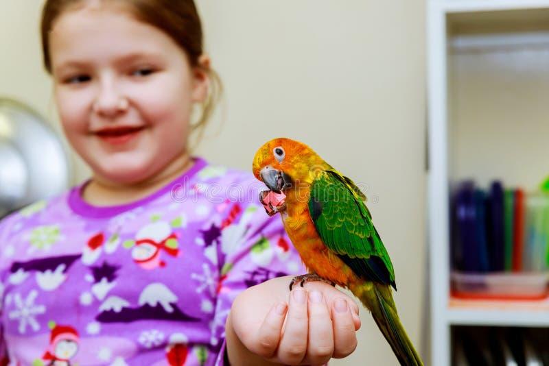 perroquet se reposant sur une main de filles photos libres de droits