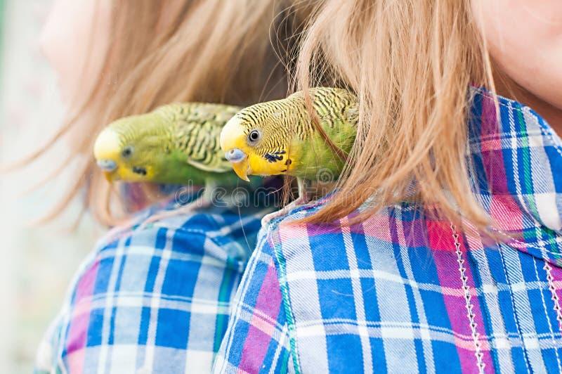 Perroquet sur l'épaule de l'enfant photographie stock