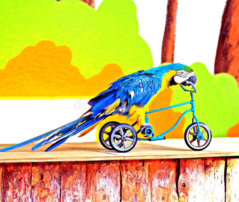 Perroquet sur le vélo image stock