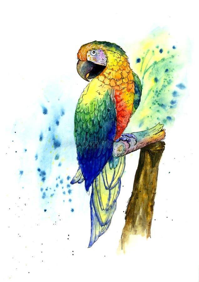 Perroquet tropical coloré sur une branche Peint dans l'aquarelle illustration de vecteur