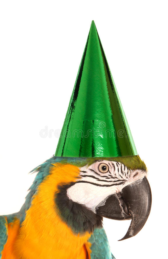 Perroquet utilisant un chapeau de fête d'anniversaire image stock