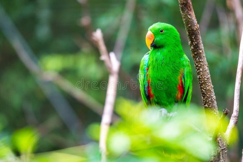 Perroquet vert dans l'arbre photos libres de droits