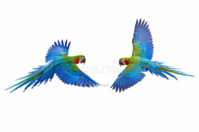 Perroquet volant coloré photos libres de droits
