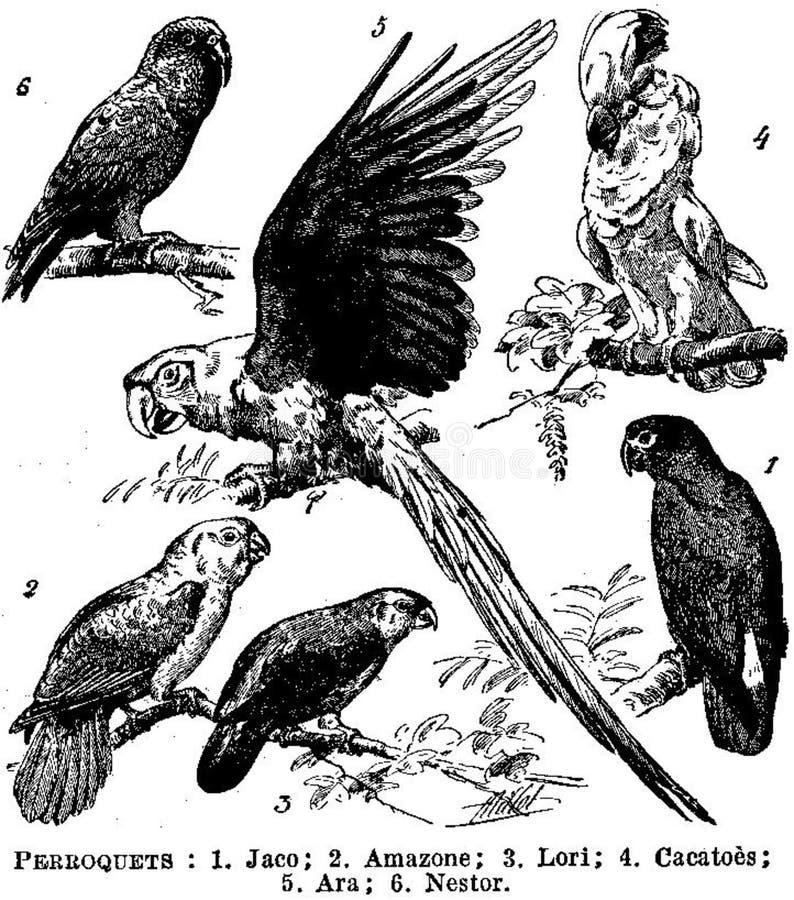 Perroquets Free Public Domain Cc0 Image