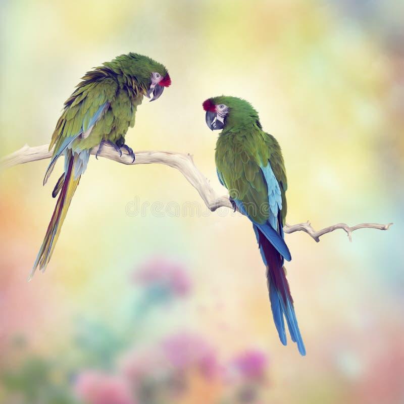 Perroquets d'ara de Greenl étant perché sur une branche photo libre de droits